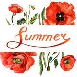 Πλαίσιο λουλουδιών παπαρουνών Wildflower σε ένα ύφος watercolor που απομονώνεται Στοκ εικόνες με δικαίωμα ελεύθερης χρήσης