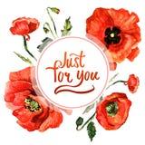 Πλαίσιο λουλουδιών παπαρουνών Wildflower σε ένα ύφος watercolor που απομονώνεται Στοκ Εικόνα