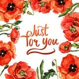Πλαίσιο λουλουδιών παπαρουνών Wildflower σε ένα ύφος watercolor που απομονώνεται Στοκ Εικόνες