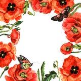 Πλαίσιο λουλουδιών παπαρουνών Wildflower σε ένα ύφος watercolor που απομονώνεται Στοκ Φωτογραφία
