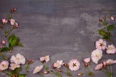 Πλαίσιο λουλουδιών στο γκρίζο shabby κομψό υπόβαθρο Άνθιση άνοιξης ρόδινη άνοιξη λουλουδιών Τοπ άποψη με το διάστημα αντιγράφων Στοκ φωτογραφίες με δικαίωμα ελεύθερης χρήσης