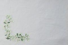 Πλαίσιο λουλουδιών των άσπρων λουλουδιών Χριστουγέννων Στοκ φωτογραφία με δικαίωμα ελεύθερης χρήσης