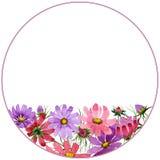 Πλαίσιο λουλουδιών kosmeya Wildflower σε ένα ύφος watercolor που απομονώνεται Στοκ Φωτογραφίες