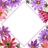Πλαίσιο λουλουδιών kosmeya Wildflower σε ένα ύφος watercolor που απομονώνεται Στοκ Εικόνα