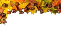 Πλαίσιο που αποτελείται από τα ζωηρόχρωμα φύλλα φθινοπώρου πέρα από το άσπρο υπόβαθρο Διάστημα αντιγράφων για το κείμενο Στοκ εικόνες με δικαίωμα ελεύθερης χρήσης