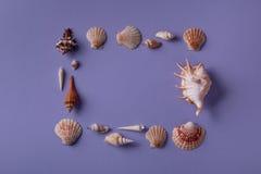 Πλαίσιο που τακτοποιείται από τα θαλασσινά κοχύλια Στοκ φωτογραφία με δικαίωμα ελεύθερης χρήσης