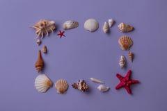 Πλαίσιο που τακτοποιείται από τα θαλασσινά κοχύλια Στοκ Εικόνες