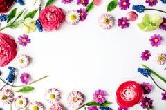 Πλαίσιο στεφανιών με τα τριαντάφυλλα, muscari, chamomile, βατράχιο στοκ εικόνες