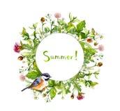 Πλαίσιο συνόρων στεφανιών - θερινά χορτάρια, λουλούδια λιβαδιών, χαριτωμένο πουλί watercolor Στοκ Φωτογραφίες