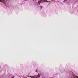 Πλαίσιο σχεδίου λουλουδιών - θέμα με τα ρόδινα λουλούδια Στοκ Φωτογραφίες