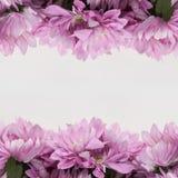 Πλαίσιο σχεδίου λουλουδιών - θέμα με τα ρόδινα λουλούδια Στοκ εικόνες με δικαίωμα ελεύθερης χρήσης
