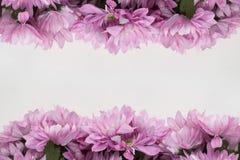 Πλαίσιο σχεδίου λουλουδιών - θέμα με τα ρόδινα λουλούδια Στοκ Φωτογραφία