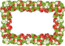 Πλαίσιο της φράουλας Στοκ Εικόνες