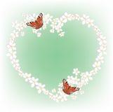Πλαίσιο του άνθους και των πεταλούδων κερασιών Στοκ Εικόνες