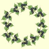 Πλαίσιο του βατόμουρου με τα πράσινα φύλλα Στοκ Εικόνες