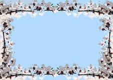 Πλαίσιο των ανθών κερασιών Στοκ Φωτογραφίες