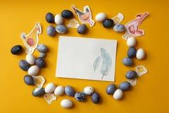 Πλαίσιο των αυγών Στοκ Φωτογραφίες