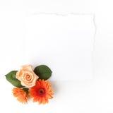 Πλαίσιο των λουλουδιών σε έναν άσπρο πίνακα, με το διάστημα για το κείμενο, θερινό θέμα Τοπ όψη Επίπεδος βάλτε Στοκ φωτογραφία με δικαίωμα ελεύθερης χρήσης