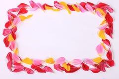 Πλαίσιο των πετάλων λουλουδιών Στοκ φωτογραφία με δικαίωμα ελεύθερης χρήσης