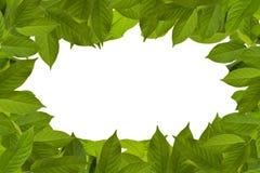 Πλαίσιο των πράσινων φύλλων Στοκ φωτογραφία με δικαίωμα ελεύθερης χρήσης