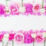 Πλαίσιο των ρόδινων και άσπρων λουλουδιών στο άσπρο υπόβαθρο όλες οι οποιεσδήποτε σύνθεσης στοιχείων floral συστάσεις μεγέθους κλ Στοκ φωτογραφία με δικαίωμα ελεύθερης χρήσης