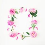 Πλαίσιο των ρόδινων τριαντάφυλλων και peonies στο άσπρο υπόβαθρο όλες οι οποιεσδήποτε σύνθεσης στοιχείων floral συστάσεις μεγέθου Στοκ Εικόνες