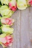 Πλαίσιο των τριαντάφυλλων Στοκ Εικόνες