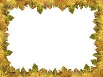 Πλαίσιο των φθινοπωρινών φύλλων σφενδάμου Στοκ φωτογραφία με δικαίωμα ελεύθερης χρήσης