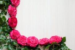 Πλαίσιο των όμορφων τριαντάφυλλων Στοκ εικόνα με δικαίωμα ελεύθερης χρήσης