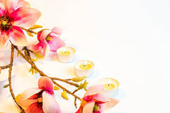 Πλαίσιο υποβάθρου Pink spa λουλουδιών Στοκ Εικόνες