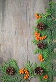 Πλαίσιο Χριστουγέννων με το δέντρο έλατου, rowanberry και pinecones Στοκ Εικόνα