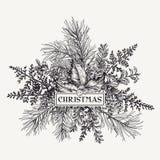 Πλαίσιο Χριστουγέννων με το πεύκο, τον ελαιόπρινο και τις φτέρες Στοκ Φωτογραφίες