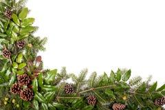 Πλαίσιο Χριστουγέννων των κλάδων δέντρων πεύκων - που απομονώνονται στο λευκό Στοκ Φωτογραφία