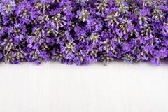 Πλαίσιο lavender σε ένα άσπρο ξύλινο υπόβαθρο στοκ φωτογραφία με δικαίωμα ελεύθερης χρήσης