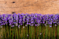 Πλαίσιο lavender σε ένα αγροτικό ξύλινο υπόβαθρο στοκ εικόνες με δικαίωμα ελεύθερης χρήσης