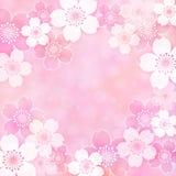 Πλαίσιο Sakura Στοκ εικόνα με δικαίωμα ελεύθερης χρήσης