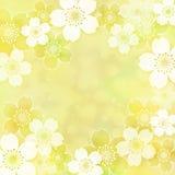 Πλαίσιο Sakura Στοκ φωτογραφίες με δικαίωμα ελεύθερης χρήσης