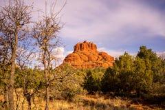 Πλαισιωμένος δέντρο βράχος κουδουνιών στοκ φωτογραφίες