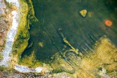 Πλαισιωμένο βακτηριακό χαλί Στοκ φωτογραφία με δικαίωμα ελεύθερης χρήσης