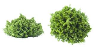πλαισιωμένο πράσινο οριζόντια φυτό φωτογραφιών Στοκ Εικόνες