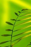 πλαισιωμένο πράσινο οριζόντια φυτό φωτογραφιών Στοκ εικόνα με δικαίωμα ελεύθερης χρήσης