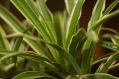 πλαισιωμένο πράσινο οριζόντια φυτό φωτογραφιών στοκ φωτογραφίες με δικαίωμα ελεύθερης χρήσης