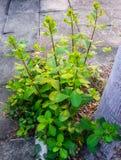 πλαισιωμένο πράσινο οριζόντια φυτό φωτογραφιών στοκ φωτογραφία