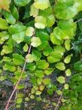 πλαισιωμένο πράσινο οριζόντια φυτό φωτογραφιών Στοκ εικόνες με δικαίωμα ελεύθερης χρήσης