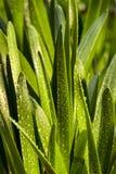 πλαισιωμένο πράσινο οριζόντια φυτό φωτογραφιών Στοκ Φωτογραφίες