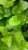 πλαισιωμένο πράσινο οριζόντια φυτό φωτογραφιών Στοκ φωτογραφία με δικαίωμα ελεύθερης χρήσης