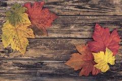 Πλαισιωμένο φθινόπωρο υπόβαθρο Στοκ φωτογραφίες με δικαίωμα ελεύθερης χρήσης