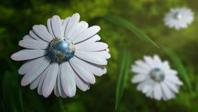 Πλανήτης Γη Daisy Στοκ φωτογραφία με δικαίωμα ελεύθερης χρήσης