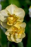 πλανήτης λουλουδιών Στοκ Φωτογραφία