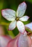 πλανήτης λουλουδιών Στοκ Εικόνες